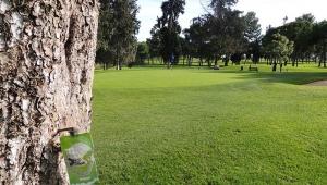 La endoterapia como tratamiento del arbolado en los campos de golf